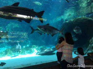 River Safari Aquarium with Kids