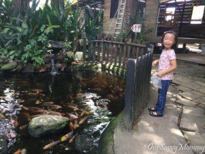 ANIMAL RESORT SINGAPORE FEEDING FISHES