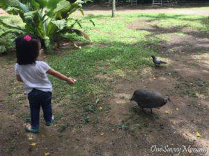 ANIMAL RESORT SINGAPORE FEEDING TURKEY
