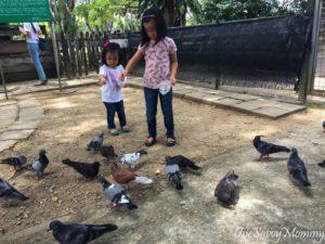 ANIMAL RESORT SINGAPORE FEEDING PIGEON