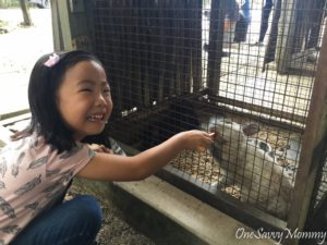 ANIMAL RESORT SINGAPORE FEEDING RABBIT
