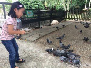 ANIMAL RESORT SINGAPORE - PIGEONS