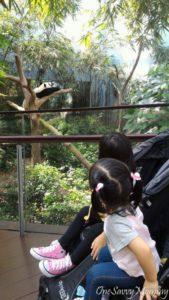 River Safari Panda