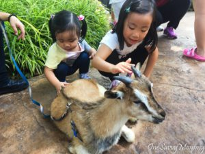 Singapore Zoo Special Experiences Animal Petting