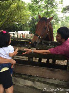 ANIMAL RESORT SINGAPORE HORSE