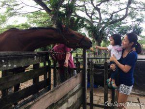 ANIMAL RESORT SINGAPORE FEEDING HORSE