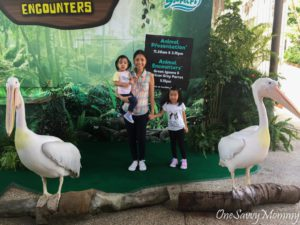 River Safari Storks