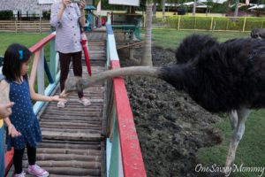 Davao City Crocodile Park Ostrich Feeding