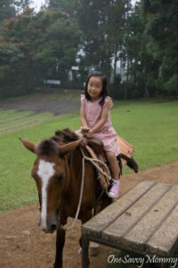 Davao Eden Nature Park Horse Riding