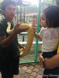 Davao City Crocodile Park Snake Petting